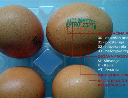 Oznake na jajcih – kaj je potrebno vedeti?