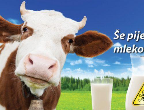 Kravje mleko? Kdaj ga boste nehali piti?
